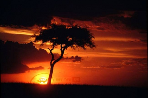 אקו טיולי שטח  – ספארי מרתק לקניה וטנזניה