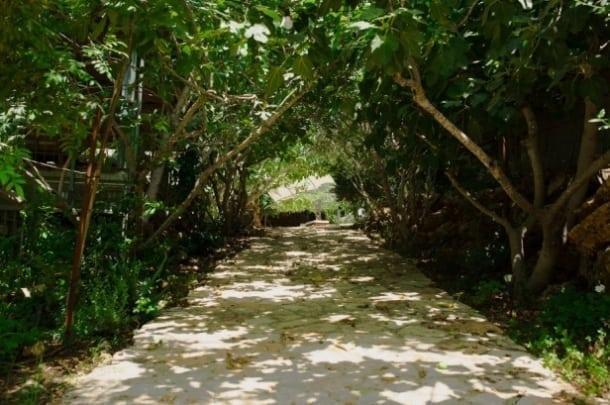 החווה האורגנית טור סיני – ירושלים